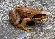 frog_jpg-for-web-small